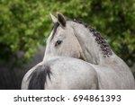 portrait of gray horse looking... | Shutterstock . vector #694861393