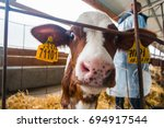 cow farm producing milk curd... | Shutterstock . vector #694917544