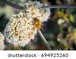 Bee Pollinating California...
