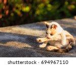 cat doing a personal hygiene ... | Shutterstock . vector #694967110