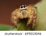 spider | Shutterstock . vector #695013046