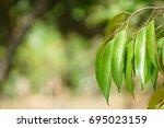 leaf  | Shutterstock . vector #695023159