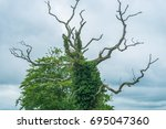 ivy covered tree  the tree... | Shutterstock . vector #695047360