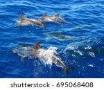 dolphins family swimming in the ... | Shutterstock . vector #695068408