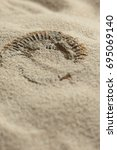 Small photo of Ammonite fossil being revealed in sand