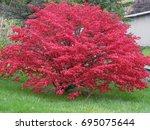 Bright Red Full Burning Bush I...
