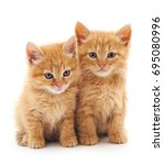 Stock photo two red cats isolated on a white background 695080996