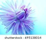 A Violet Purple Dahlia Flower...