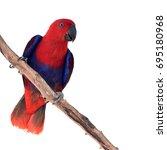 beautiful red parrot  eclectus... | Shutterstock . vector #695180968