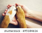 Stock photo dog paws with a spot in the form of heart and human hand close up top view conceptual image of 695184616
