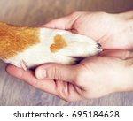Stock photo dog paws with a spot in the form of heart and human hand close up top view conceptual image of 695184628