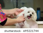 hands with comb brushing dog....   Shutterstock . vector #695221744