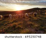 A Herd Of Sheep On A Hill. In...