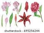 watercolors flowers  camellia ... | Shutterstock . vector #695256244