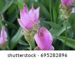 Dragonfly Inside Pink Flower Or ...