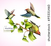 Stock vector waxwing on branches with leaves set of three birds hand drawn watercolor all objects are 695331460