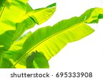 tropical leaves | Shutterstock . vector #695333908