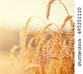 Golden Ears Of Wheat Or Rye On...