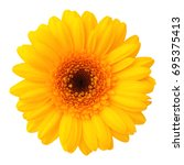 Stock photo yellow flower isolated 695375413