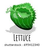 realistic icon lettuce  food...