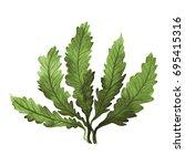 Green Seaweed Kelp  Algae In...