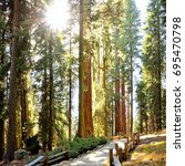 sunbeams through giant trees of ... | Shutterstock . vector #695470798