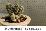 cactus | Shutterstock . vector #695501818