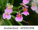 beautiful orchid  flowers  in... | Shutterstock . vector #695501908