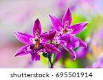 beautiful orchid  flowers  in... | Shutterstock . vector #695501914
