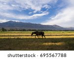 horse on the meadow in central... | Shutterstock . vector #695567788