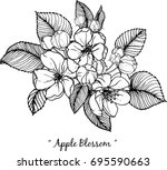 apple blossom illustration on... | Shutterstock .eps vector #695590663
