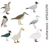 goose  tringa  white cormorant  ... | Shutterstock .eps vector #695610190
