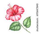 red hibiscus flower. image for... | Shutterstock . vector #695647840