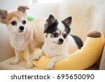 chihuahua dog | Shutterstock . vector #695650090