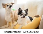 chihuahua dog | Shutterstock . vector #695650120