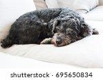 black shisu dog sleeping | Shutterstock . vector #695650834