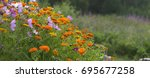 garden flowers in a large... | Shutterstock . vector #695677258