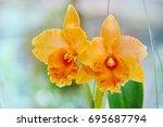 beautiful orchid  flowers  in... | Shutterstock . vector #695687794