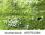 Small photo of Moss naturally occur naturally.
