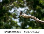 indian roller or blue jay bird | Shutterstock . vector #695704669