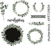 eucalyptus vector hand drawn... | Shutterstock .eps vector #695719834
