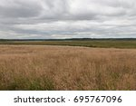 Small photo of Plants and water meadow, St Aidans nature park