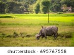 asian image of the field in... | Shutterstock . vector #695767558