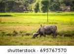 asian image of the field in... | Shutterstock . vector #695767570