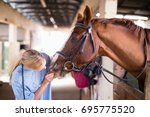 Stock photo female vet checking horse teeth while standing in stable 695775520