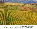 rows of colorful vineyards on... | Shutterstock . vector #695794603