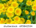 background with yellow field...   Shutterstock . vector #695842534