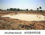 Small photo of Animals Drinking Water from low level reservoir due to summer scarcity and short rainfalls in a village of JHARKHAND ,INDIA