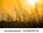 the grass under the golden... | Shutterstock . vector #695849470