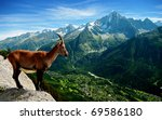 A Mountain Goat Looks At The...